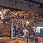 Scotty the T-Rex