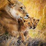 Explorer Kenya Foto