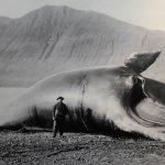 Photo of The Husavik Whale Museum