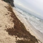 The small beach covered in seaweed.