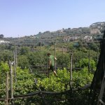 Brilliant experience. See how olives and lemons are harvested. Enjoy a gorgeous Italian meal cre