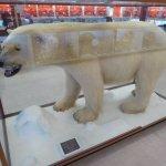 Stuffed Polar Bear in Museum