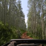 ORV trail outside of Vail