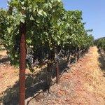 ภาพถ่ายของ William Hill Estate Winery