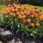 LIDO outside, gorgeous flowersbeds