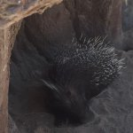 My daughter still remembers see the porcupine from a visit several years ago