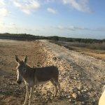 Foto de Donkey Sanctuary Bonaire
