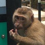 Foto de Monkey Hill