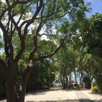 A nice shaded walkway down to the beach. Beware of the curly tails and iguanas ;-)