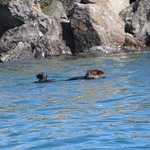 Sea otter we saw during the boat ride