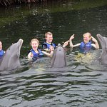 Dolphins Plus - Key Largo Foto