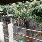 Photo of Maetang Elephant Park