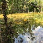 Foto de Emerald Pool (Sa Morakot)