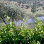 Rio Guadiana, junto al viñedo