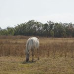 Photo of Camargue autrement safari 4x4
