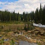 Photo of Mount Revelstoke National Park