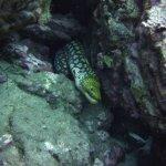 Foto de LJ Diving Tenerife