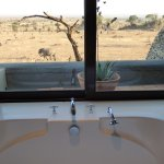 can watch the animals wander by while taking a bath or shower!