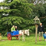 Paddy the donkey with guests