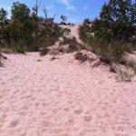 Foto de Saugatuck Dunes State Park