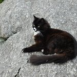 Lena, the Blowing Rock cat