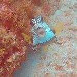 Pufferfish poser
