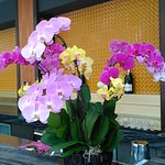 Orchids at the bar