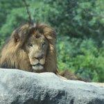 Photo de Franklin Park Zoo