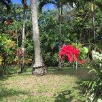 Photo of Maire Nui Botanical Gardens