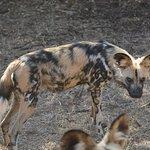 Ann van Dyk Cheetah Centre Foto