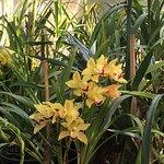 Photo de Hakgala Botanic Gardens