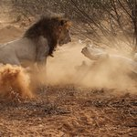 Foto de Porini Amboseli Camp
