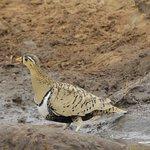 Photo de Porini Amboseli Camp