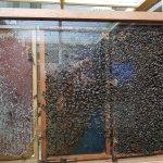 Photo of Clifford's Honey Farm