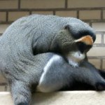 Photo of Erlebnis Zoo Hannover