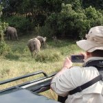 Lovely vehicles and incredible wildlife viewing