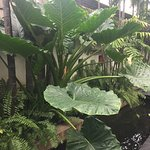 Photo of Fah Lanna Spa