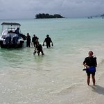 Photo of Whitetip Divers