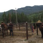 Lodge corral, horses being prepared for ride