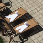 Pool swans!