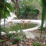 Photo of Mayan Palace Riviera Maya