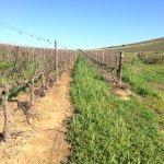 Photo of Hartenberg Wine Estate