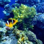 Photo de Darna Village Beach Hotel & Dive Center
