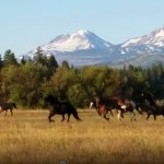 Horses coming in for work in the morning at Black Butte Ranch