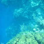 Snorkel Tour Shelf