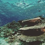 Reefs around dive club Hulhumale, we are are very lucky to have the best reefs in Maldives.