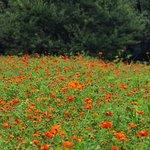 Photo of Hama Rikyu Gardens