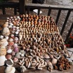 A week's shell finds - All EMPTY - please return live shells to the sea!