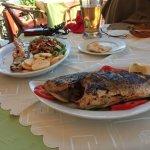 fresh sea bass & salmon