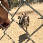 Mischievous emu
